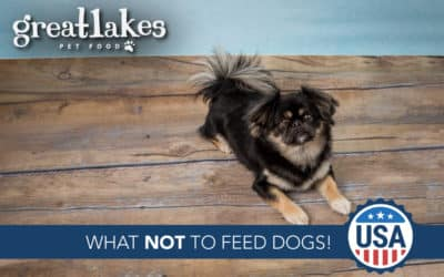 What NOT to Feed Dogs!