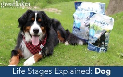 Life Stages Explained: Dog
